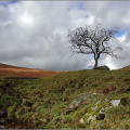 A lone tree, Glen Lochay, near Killin