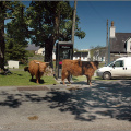 The locals in the Duirinish main street